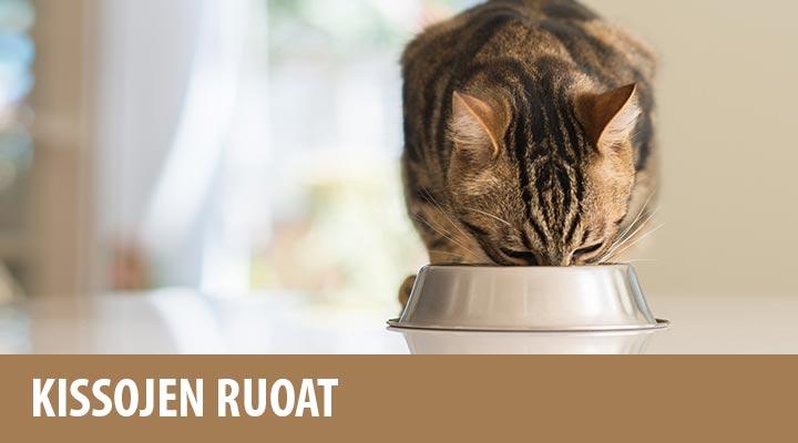 Kissojen Raakaruokinta