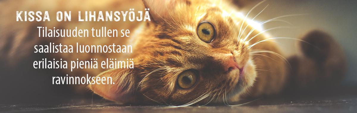 Raakaruokinta Kissa
